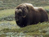Dovrefjell–Sunndalsfjella National Park