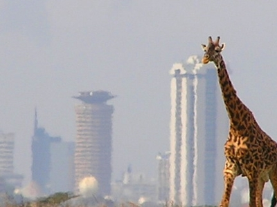 Nairobi National Park - 1