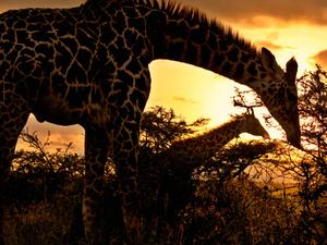 Nairobi Exclusive Tour Photos