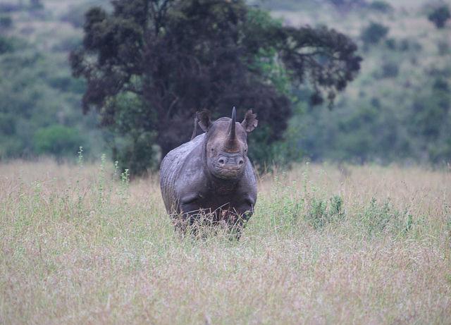 Nairobi National Park 4 Hours Photos