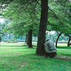 Uhuru Park Morning View