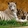 Nandan Kanan Zoo 12