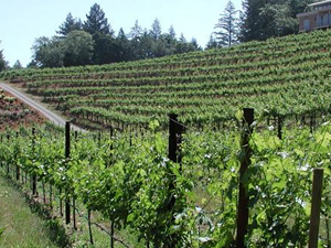 Napa Valley Wine Capital of India