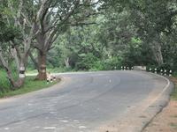 Narsapur Forest