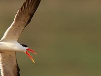 National Chambal Wildlife Sanctuary