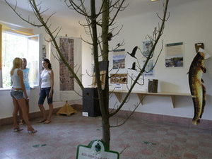 Nature Preserving Exhibition Room