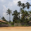 Negombo Beach And Palms
