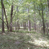 Nehantic State Forest
