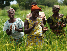 Nerica Farmers Benin