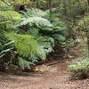 Ngamoko Track - Te Urewera National Park - New Zealand