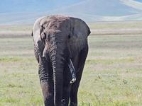 African Safari Tour Tanzania