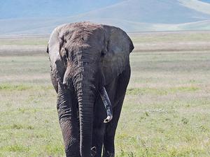 African Safari Tour Tanzania Photos