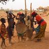 Niger Pounding Millet
