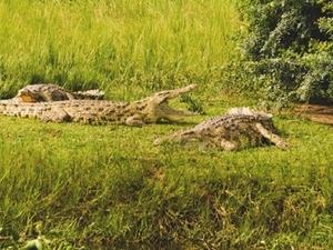 Wildlife Safari Tour To Western Uganda Photos