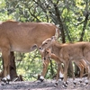 Lakh Bahosi Sanctuary