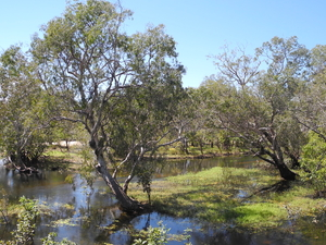 Australias Northern Territory - Crocs, Rock Art and Falls 6 Days