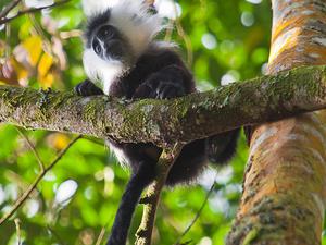 Best of Rwanda Safari Photos
