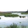 Yauza River In Mytischi