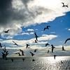 Ocean - Birds & Clouds - Key Biscayne FL