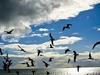 Ocean - Birds & Clouds - Key Biscayne FL
