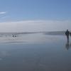 Ocean Shores Clam Digging