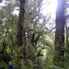 Old Maori Trail - Te Urewera National Park - New Zealand