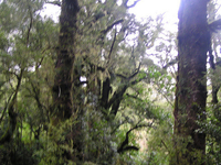 Old Maori Trail