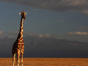 5 Days Luxury Safaris Photos
