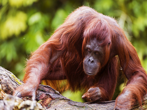 4 Days and 3 Nights Orangutan Camping Trip (GOT4) Photos