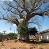 Orphanage In Chiredzi - Zimbabwe