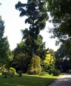 Botanical Garden of Naples