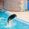 Otariidae Jump