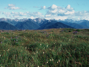 Olympic Wilderness