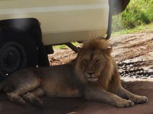 Tanzania Wildlife Explorer Photos