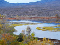 Pahranagat National Wildlife Refuge
