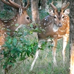 Ballabhpur Wildlife Sanctuary