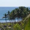 Palms El Salvador