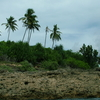 Palm Trees Guimaras