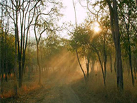 Panna National Park