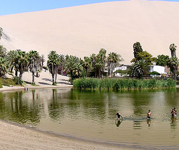 Panorama Of The Oasis