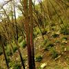 Papakorito Falls Trail - Te Urewera National Forest - New Zealand