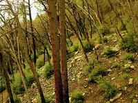 Papakorito Falls Trail