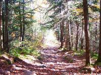 Paradise Trail 271