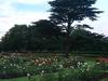 Park's Extensive Rose Gardens