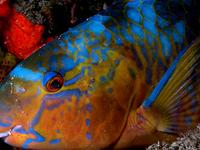 Teluk Cenderawasih National Park