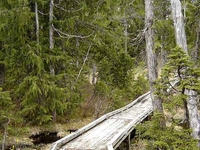 Pass Lake Trail