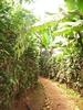 Pathway @ Bwindi UG
