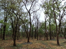 Pench Forest