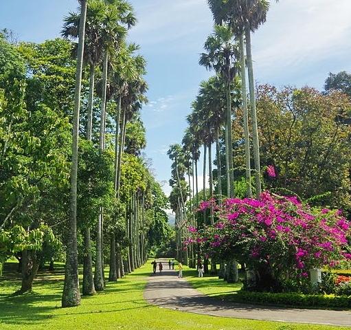 City Tour Kandy - Sri Lanka Photos