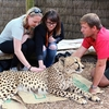 Pet Cheetah @ Wellington Zoo NZ